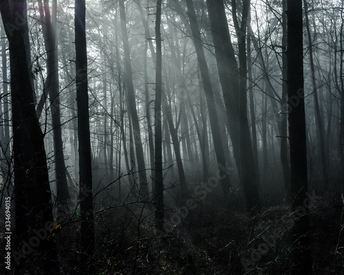 Dark forest view lights glaring through mist