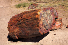 Arizona / USA - August 01, 2015: A Petrified Tree Trunk In Petrified Forest National Park Area, Arizona, USA