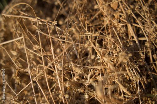 Fényképezés dry grass