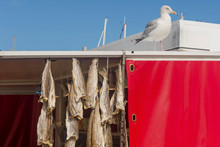 Seagull On The Roof Of A Dried...