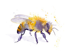 Watercolor Drawing Of An Insect - Bee From Splashes