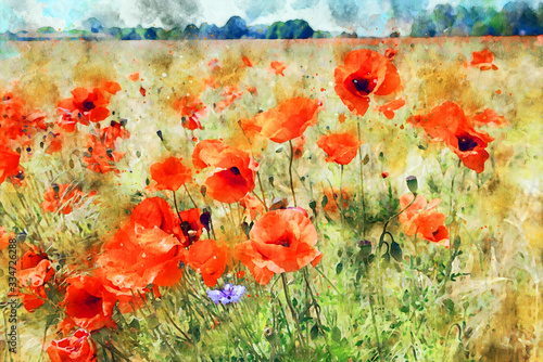 Obraz maki   watercolor-painting-of-poppy-field-at-havelland-geion-in-germany