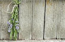 Lavender Tuft Hanging Under Th...