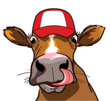 Curious Cow With Long Tongue And Hat On The Head, Looking At You