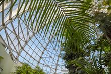 Botanical Garden Glass Ceiling...