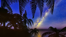 Palm Trees, Sunset And The Sta...