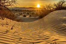 Mesquite Plants Cling To Sand ...