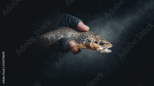 Fotografia Trout in the hand of a fisherman.
