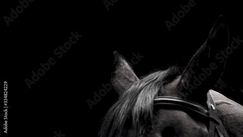 Fototapeta horse on black background obraz