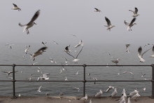 White Seagulls Perched On The ...
