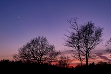 Tree Silhouette At Sunset With Waxing Crescent Moon
