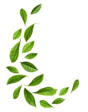 Fresh Green Tea Leaves Flying ...