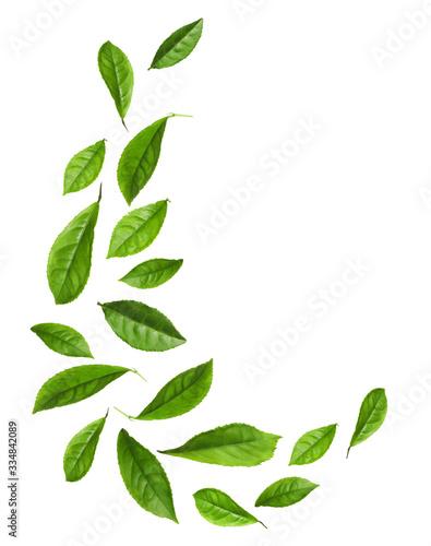 Photo Fresh green tea leaves flying on white background
