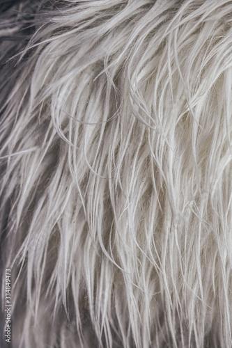 Photo Fourrure synthétique blanche