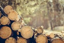 Felling A Tree. Wooden Logs Fr...