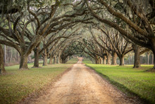 Beautiful Southern Georgia Road Driveway With Canopied Pecan Trees Starting To Bloom In The Spring On An Overcast Day