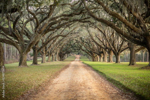 Photo Beautiful southern Georgia road driveway with canopied pecan trees starting to b