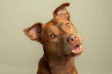 Happy Smiling Dog Head Tilting...