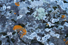 Lichen On Rock Texture