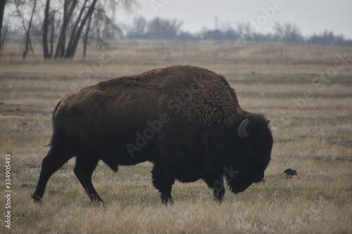 Fotografia, Obraz Colorado Wildlife