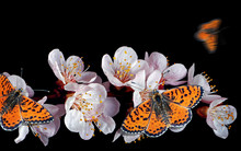 Bright Red Butterflies On Whit...