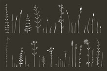 Hand Drawn Doodle Medical Herbarium Wild Grass And Flowers Collection, Illustrator Monochrome Art Brushes Set White Herbs Isolated On Black.