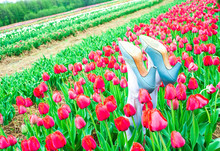 Halloween Decor Wicked Witch Of West Legs With Blue Shoes In Tulips Fields