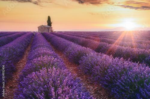 Fotografie, Obraz Provence, Southern France. Lavender field at sunrise, Valensole