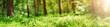Leinwanddruck Bild - pine and fir forest panorama in spring