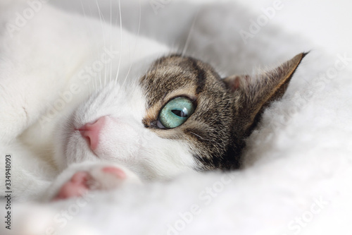Fototapeta Close up of tabby cat sleeping in his bed