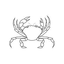 Vector Spider Crab On White Ba...
