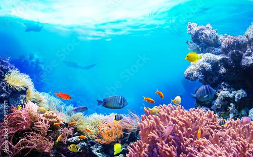 Stampa su Tela Animals of the underwater sea world