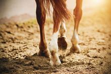 A Horse With Thin, Elegant Leg...
