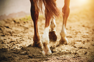 A horse with thin, elegant legs and unshod hooves walks slowly on the sand, which is illuminated by bright, warm sunlight.