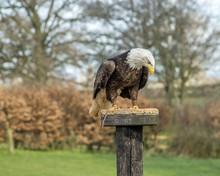 Birds Of Prey At A Falconry Centre