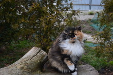 Tricolor Cat Sits On A Log Among The Trees And Thuja