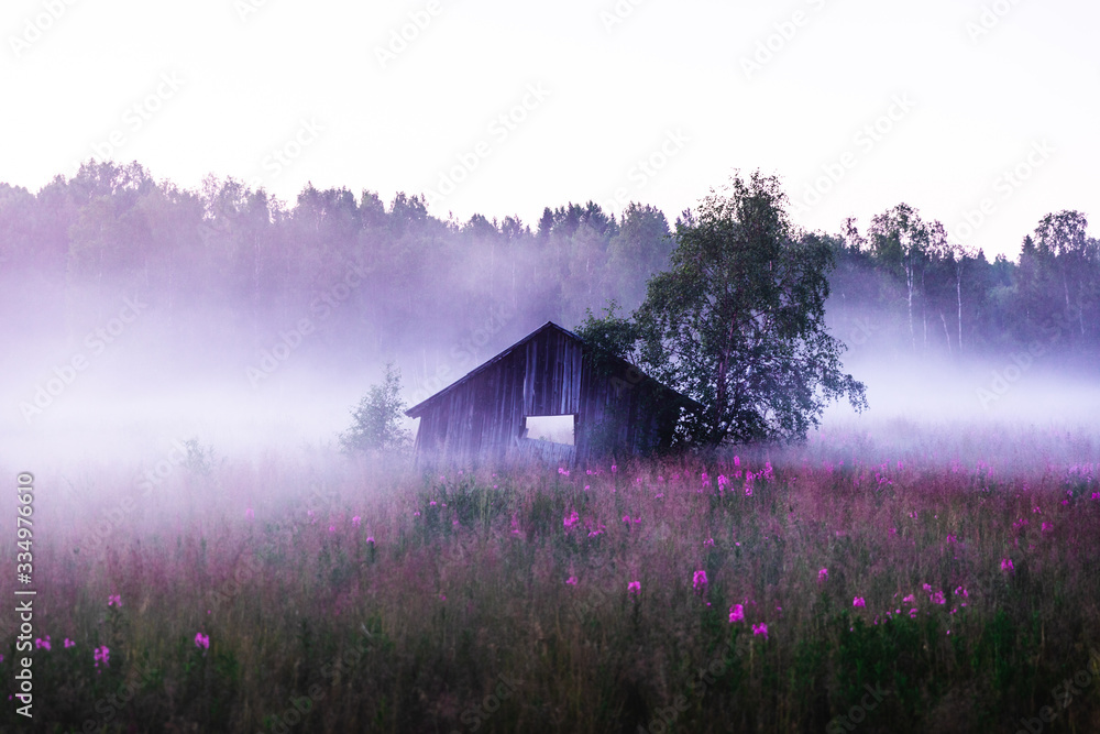Old abandoned shed in a foggy meadow during a summer sunset in Sweden