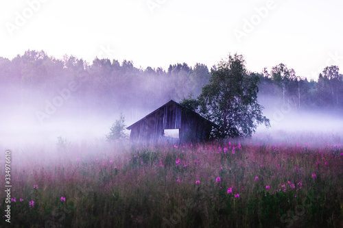 Old abandoned shed in a foggy meadow during a summer sunset in Sweden - 334976610