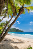 Palm trees on sandy beach palm and turquoise sea. Summer vacation and tropical beach concept.