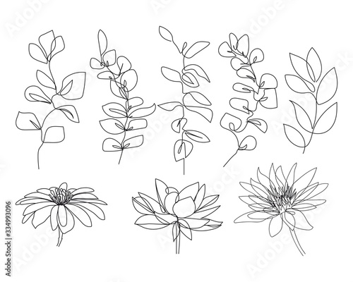 Continuous Line Drawing Set Of Plants Black and White Sketch of Leaves Isolated on White Background. Branch Leaves One Line Illustration. Vector EPS 10. - 334993096
