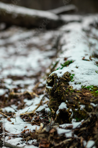 Snowy Branch With Green Moss