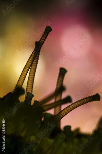 Photo macro stella marina tentacolo