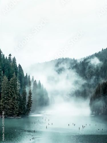 Okleiny na drzwi - Lasy - Drzewa  fog