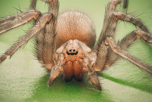 Very Detailed View Of Spider T...