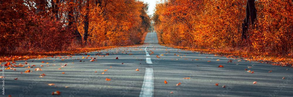 Fototapeta Banner 3:1. Empty asphalt road in autumn fall forest. Autumnal background... Selective focus