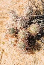 Desert Landscape With Succulents