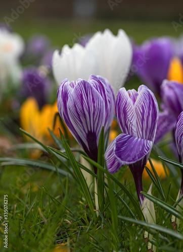 Obraz Wiosna - fototapety do salonu