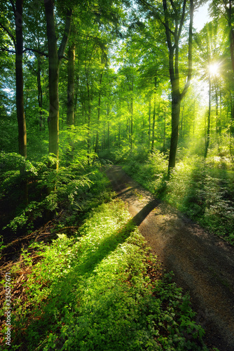 Fototapeta krajobraz   sun-rays-create-a-vibrant-green-scenery-of-light-and-shadows-on-a-forest-path