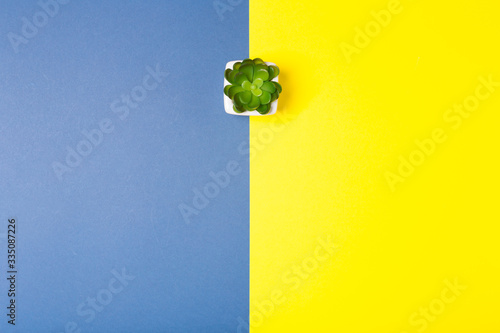 Fotomural Small plant on contrast bright blue and yellow background