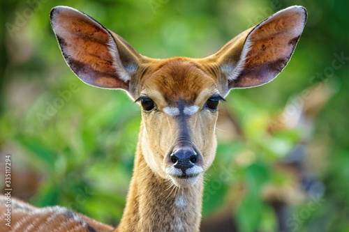 Photo Shallow focus shot of a beautiful antelope with a blurred background